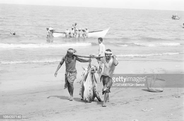 Yémen du Nord juin 1977 Sur la plage de Kaura deux pêcheurs portent le sourire aux lèvres de gros poissons qu'ils viennent de capturer A l'arrière...