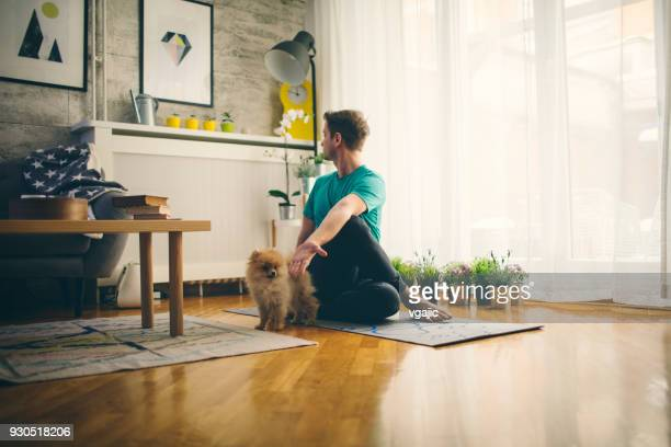 yoga at home - lap dog stock pictures, royalty-free photos & images