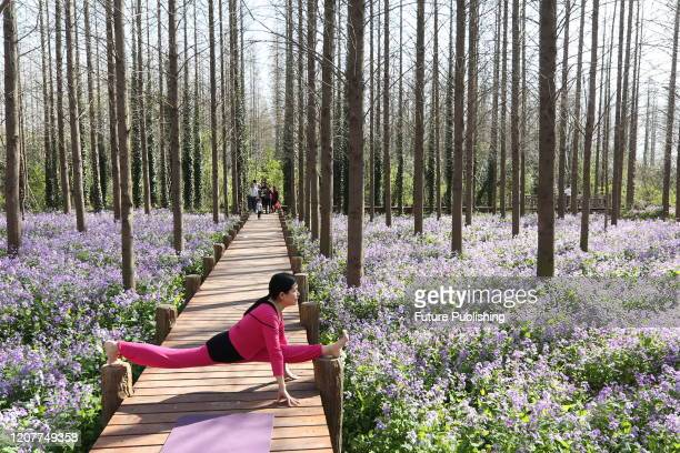 XUYI CHINA MARCH 19 2020 Yoga lovers practice yoga in blooming orchids Xuyi County Jiangsu Province China March 19 2020 PHOTOGRAPH BY Costfoto /...