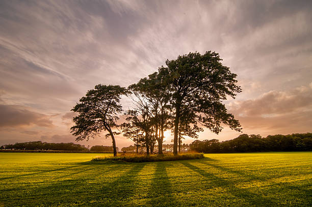 Yonderfield West Kilbride