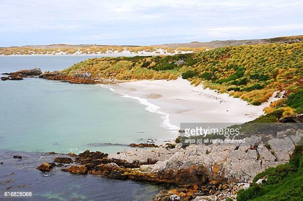yorke bay beach near stanley / falkland islands - falklandinseln stock-fotos und bilder