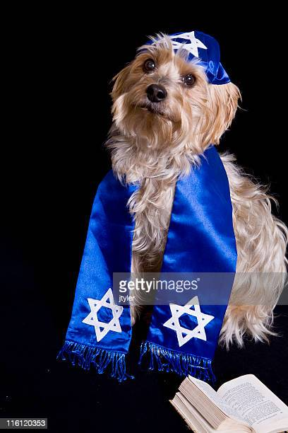 Yorkie with a Yarmulke