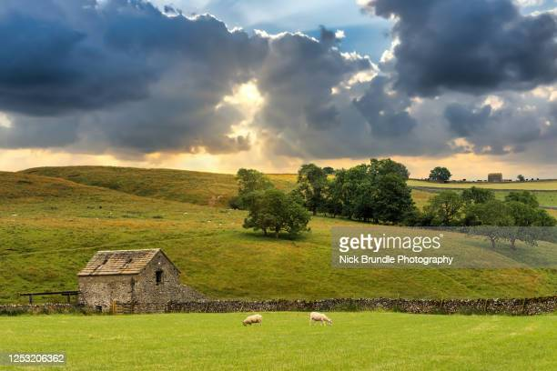 yorkshire dales, england - rural scene stock pictures, royalty-free photos & images