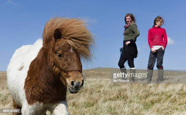 Yorkshire shepherdess Amanda Owen and her daughter Raven head onto the moors to feed the horses at Amanda's farm Ravenseat on April 15 2014 near...