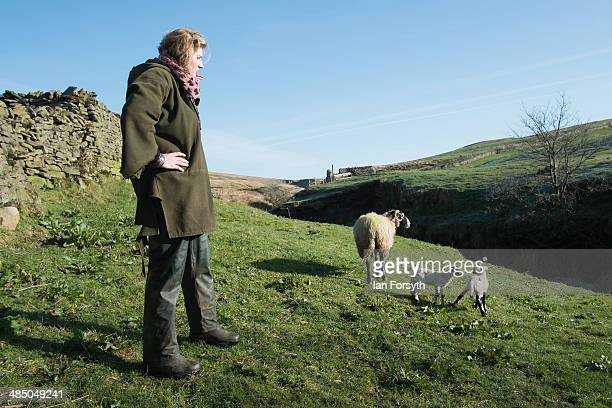 Yorkshire Shepherdess Amanda Owen checks on a couple of new lambs to see if they have bonded with their mother on April 15 2014 near Kirkby Stephen...