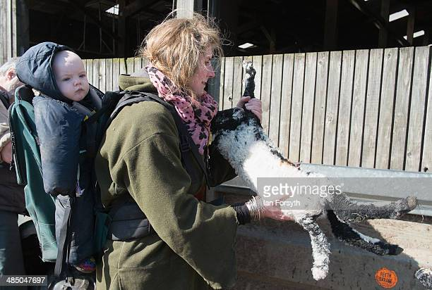 Yorkshire Shepherdess Amanda Owen checks the health of a new born lamb with her daughter Annas 9 months carried on her back on April 15 2014 near...