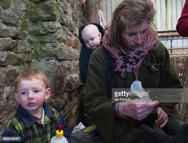 Yorkshire Shepherdess Amanda Owen feeds and checks new born lambs with her daughter Annas 9 months carried on her back on April 15 2014 near Kirkby...