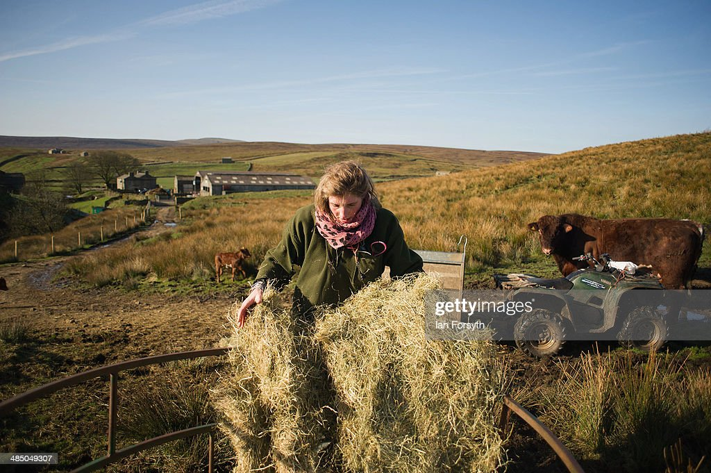 Daily Life Of A Shepherdess On The Yorkshire Moors : News Photo