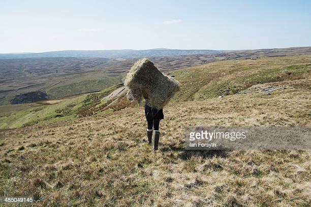 Yorkshire shepherdess Amanda Owen heads onto the moors to feed the horses at Amanda's farm Ravenseat on April 15 2014 near Kirkby Stephen England...