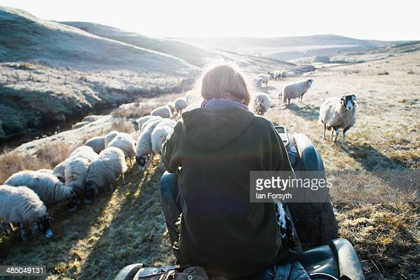 Yorkshire Shepherdess Amanda Owen heads out high onto the moors through early morning frost to feed her sheep on April 15 2014 near Kirkby Stephen...