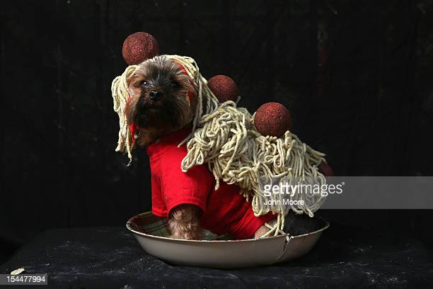 Yorkshire terrier Baxter poses as spaghetti and meatballs at the Tompkins Square Halloween Dog Parade on October 20 2012 in New York City Hundreds of...