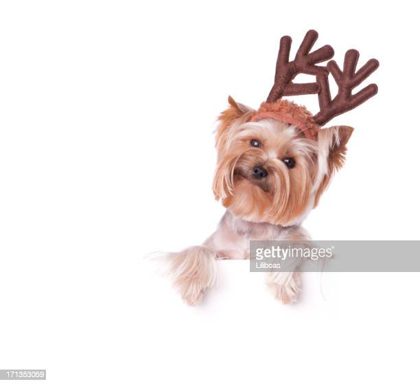 Yorkshire Terrier Holding a Blank Sign
