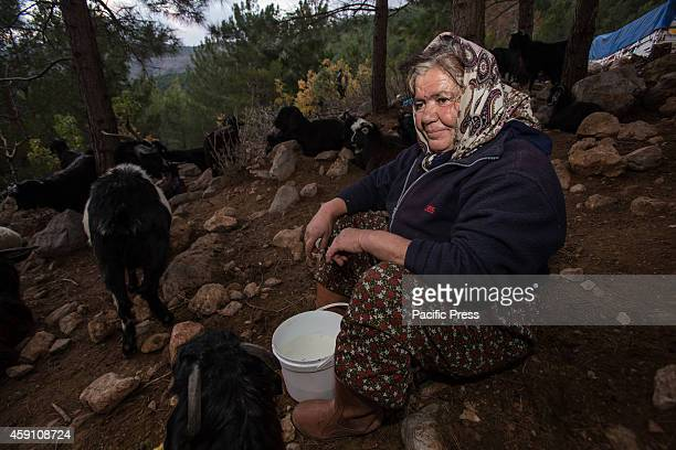 Yoruk shepherd Ummu Ogan gets ready to milk her familys goats during the seasonal migration to the lower grazes on coastal hills