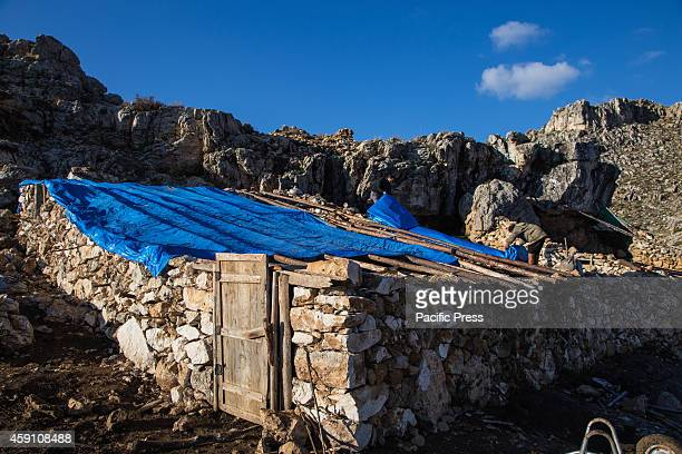 Yoruk shepherds Ozcan and Ozay sons of Refik remove the cover of their goat shelter before leaving for the seasonal migration to the lower grazes on...