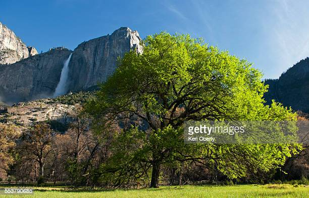 Yosemite Falls as seen from the valley floor in Yosemite National Park, California.