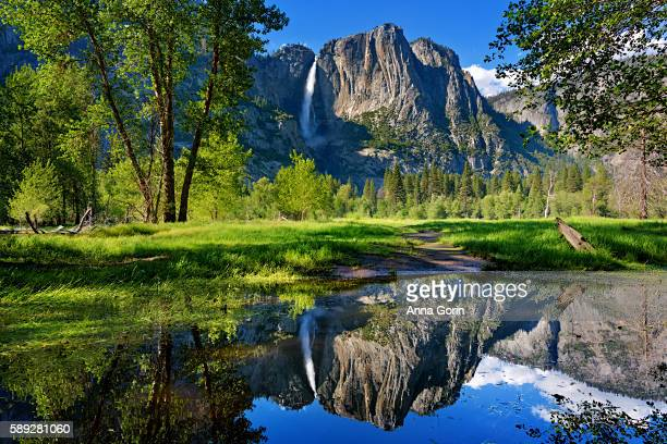 yosemite falls reflected perfectly in outlet of merced river by swinging bridge, yosemite national park, california - yosemite nationalpark stock pictures, royalty-free photos & images