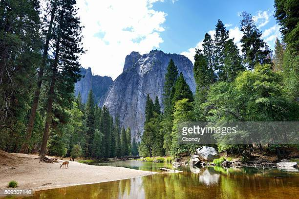 yosemite national park - california stock-fotos und bilder