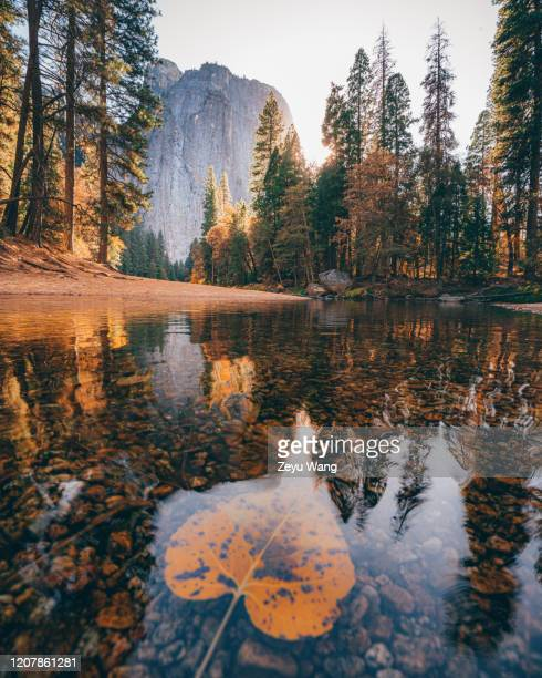 yosemite - wang he stock pictures, royalty-free photos & images
