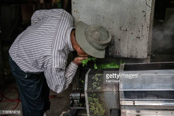 Yoshio Moriuchi smells freshly picked tea leaves as they pass through a machine that will process them ready for consumption on April 18, 2019 in...