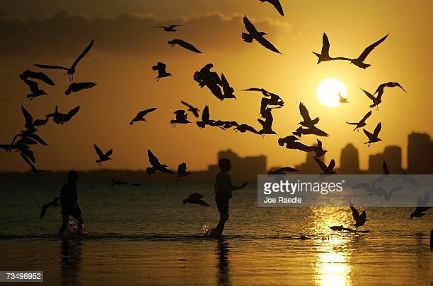 Yossi Caroline and his brother Menachen Caroline feed a flock of seagulls during sunset on March 5 2007 in Miami Florida