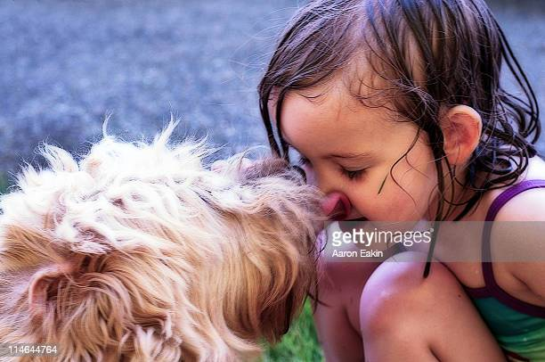 you can pick your friends nose - soft coated wheaten terrier stock photos and pictures
