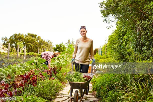 you don't getting any fresher than this! - wheelbarrow stock photos and pictures