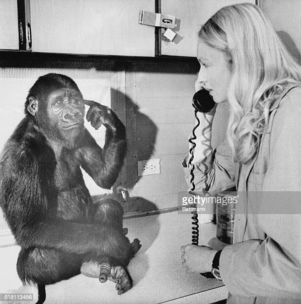 'You key there me cookie' With that sign language Koko the gorilla tells her mentor 28year old graduate student Penny Patterson to get the key open...