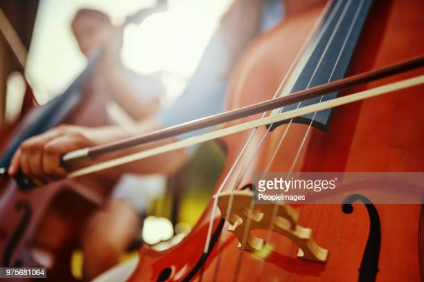 you must practice your passion to perfect it - stringed instrument stock pictures, royalty-free photos & images