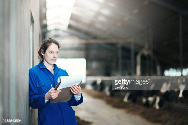 you never know how big your farm could grow - female animal stock pictures, royalty-free photos & images