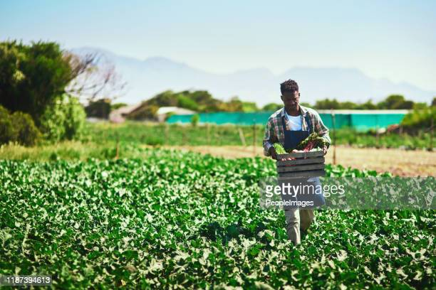 you reap what you sow in life - africa stock pictures, royalty-free photos & images