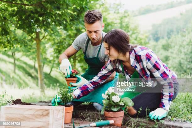 young adult couple doing gardening together - horticulture stock pictures, royalty-free photos & images