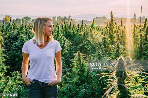 young adult female looks across a field of mature herbal cannabis plants at a cbd oil hemp marijuana farm in colorado - cbd oil stock pictures, royalty-free photos & images