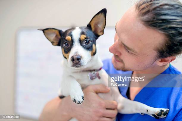 Young adult male veterinarian holding a small scared dog