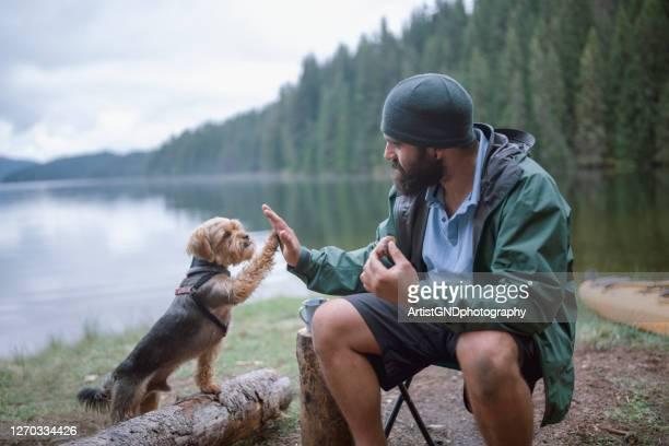 若い大人の男はキャンプ中に彼の犬と遊んでいます - 動物調教師 ストックフォトと画像