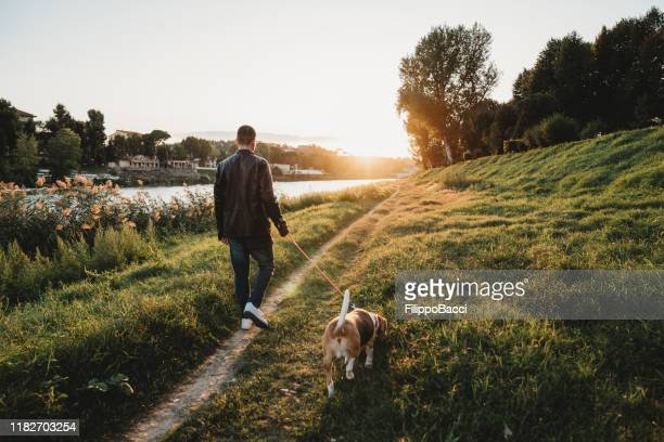 young adult man walking with his dog near a river in the city - dusk stock pictures, royalty-free photos & images