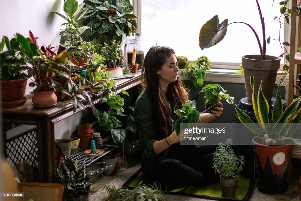 若い成人女性を自宅屋内家の植物に水をまく : ストックフォト