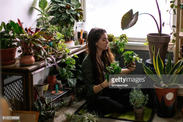 young adult woman at home watering indoor house plants - flora imagens e fotografias de stock
