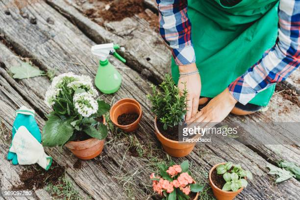 young adult woman taking care of plants - potting stock pictures, royalty-free photos & images