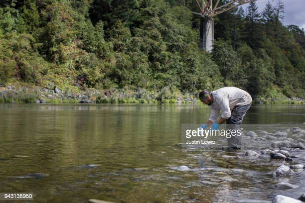 Young Adult Yurok Fisherman Ankle Deep in Klamath River, Bending at Waist to Sample Water