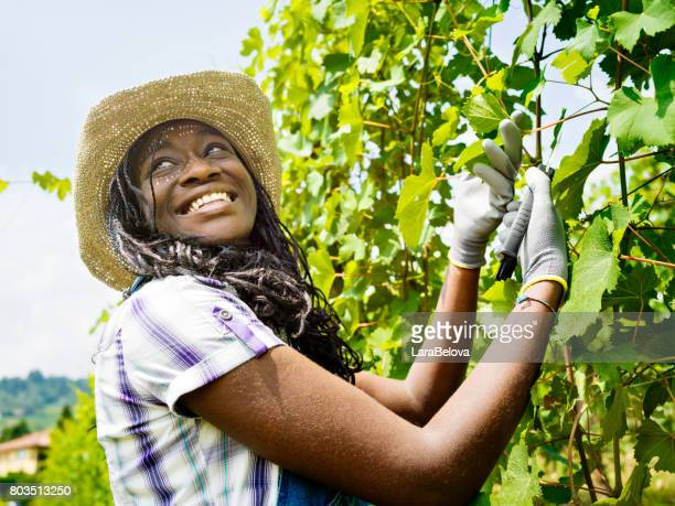 Young African agricultural woman in wineyard