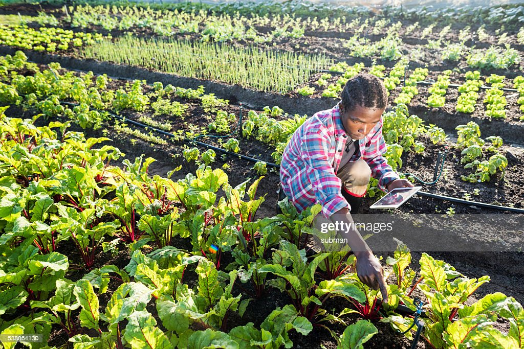 Young African male checking his tablet in vegetable garden : Stock Photo