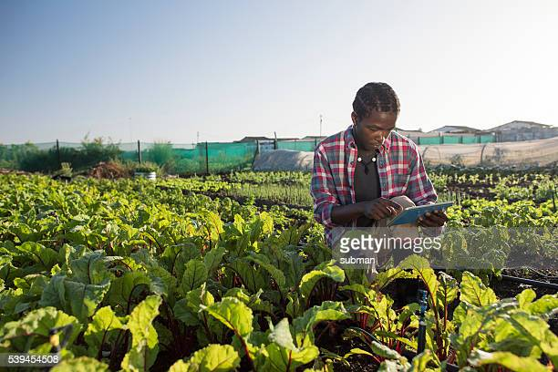 Young African male checking his tablet in vegetable garden
