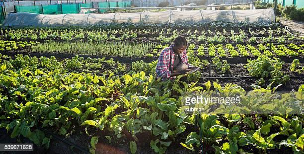 Junge afrikanische Mann überprüfen seine tablette im Gemüsegarten