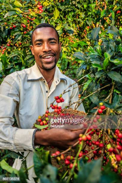 Young African man collecting coffee cherries, East Africa