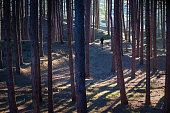 running gear running woods