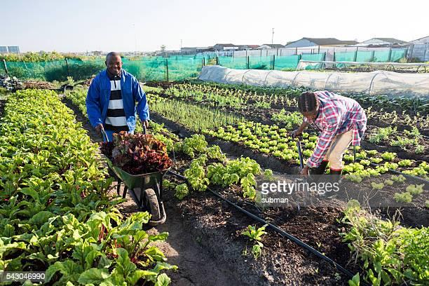 Junger afrikanischer Mann stehen Lächeln Garten