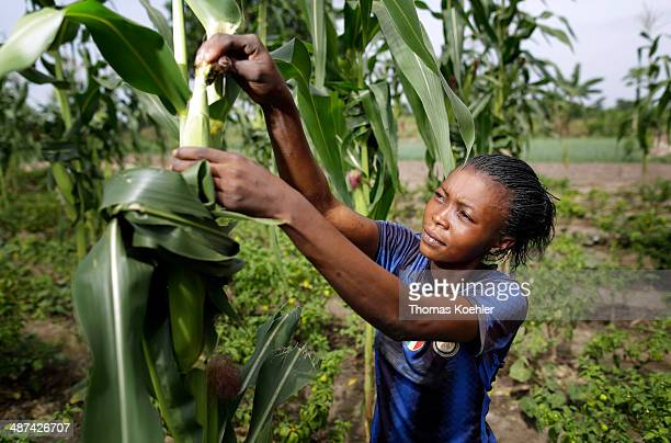 A young African woman at work in the fields checking the maize crop just outside Bangui pictured on March 13 2014 near Bangui Central African Republic