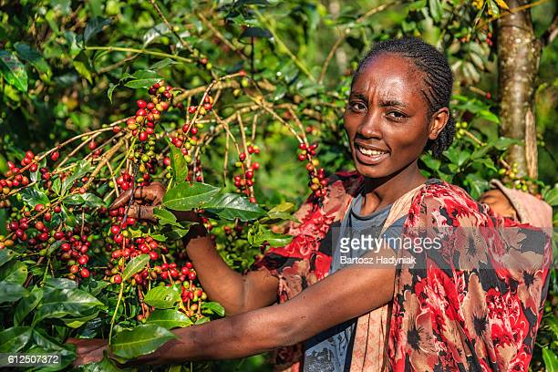 Young African woman collecting coffee cherries, East Africa