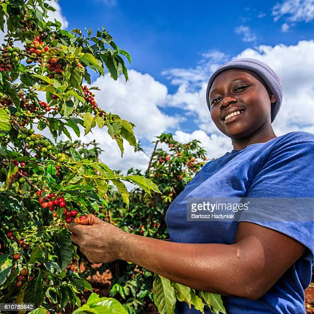 Young African woman collecting coffee cherries, Kenya, East Africa