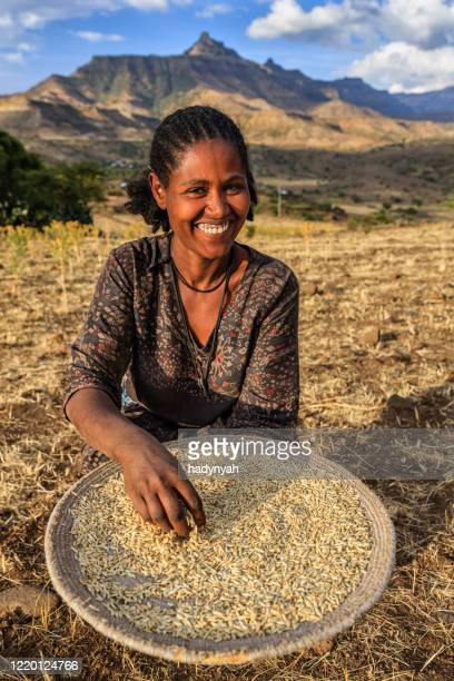 young african woman is sifting the sorghum, east africa - horn of africa stock pictures, royalty-free photos & images